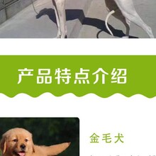 比格犬幼崽多少钱一只养狗场图片