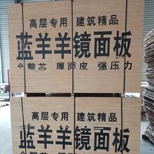徐州供應建筑模板覆膜板安全可靠,建筑模板圖片