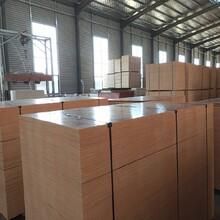 杭州熱門建筑模板覆膜板專業生產廠家圖片