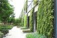 龍崗專業垂直綠化墻