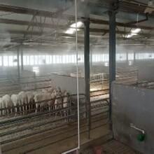 永創嘉輝養殖場消毒,中衛養殖場消毒除臭設備圖片