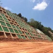 南岸植生砼護坡增強劑,綠化混凝土圖片