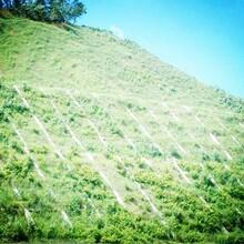 中德新亞綠化混凝土,西藏山南乃東區植生砼護坡增強劑圖片