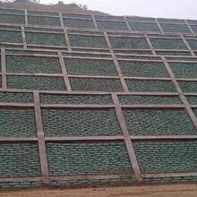 中德新亞植生混凝土,西藏山南浪卡子縣植生砼護坡增強劑圖片