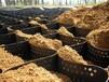 润杰蜂巢格室护坡,郴州焊接土工格室进货价