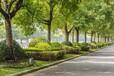 密云園林綠化施工