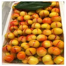 東營櫻桃樹價格是多少,矮化櫻桃苗圖片