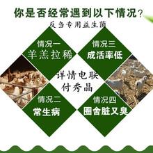牛羊改善腸道牛羊益生菌產品要點圖片