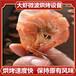 30KW微波大虾烘烤必威电竞在线山东立威厂家