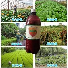 邢台液体生根菌剂瓜果蔬菜用肥防腐根防重茬图片