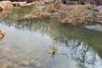湖北黑臭水體治理工程多功能礦物凝集劑