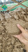 內蒙古錫林郭勒污泥濃縮脫水一體機廠家供貨