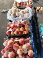 水果批發商的無奈圖片