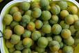 早熟蜂糖李樹苗苗木基地;2021蜂糖李苗價格是多少