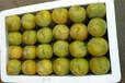 蜂糖李苗施肥-合肥早熟蜂糖李树苗种苗繁育基地