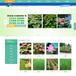 水生植物網站宣傳推廣,商集客效果看得見