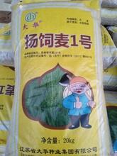 新品种大麦种子选种精细图片