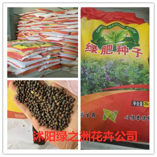 秋季绿肥种子国内批发点