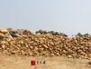 廣州庭院假山石出售黃蠟石廠家大量現貨公園造景觀景石