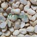 蠶豆脫皮機蠶豆磕瓣機蠶豆瓣設備