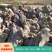 杭州產地天然太湖石窟窿石自然石原石