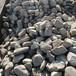 桐廬園林景觀石產地鵝卵石水沖石自然石