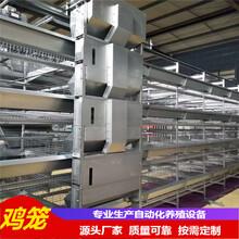 中州牧業全自動化雞籠使用壽命15年以上提供全套設備圖片