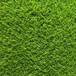 W6080-2516淺三色人造草坪曲加直環保江蘇塑料草坪幼兒園綠茵悅動