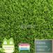 MQS-3516人造草坪加高加密江蘇出口仿真草皮幼兒園綠茵悅動