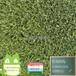 WLS-3516人造草坪加高加密高磅重江蘇仿真草皮幼兒園綠茵悅動