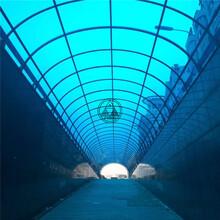 商洛山陽陽光板山陽賣陽光板的山陽哪有賣陽光板圖片