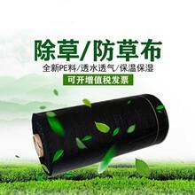 廠家供應聚丙烯地布黑色生態防草布多種規格圖片