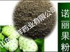 諾麗果粉沖飲品粉劑顆粒植物飲料固體飲料配方定制