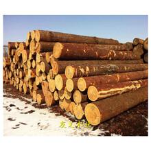 咸陽建筑木跳板廠家,規格價格優圖片