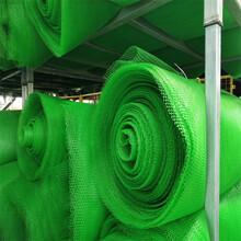 三維植草網三維植被網三維網墊三維土工網墊礦山修復EM5五層圖片