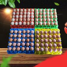 塑料雞鴨蛋托耐高溫30枚蛋托彩色塑料蛋托圖片