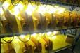 陽泉市耐高溫20W防爆燈