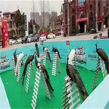 活體百鳥展覽出租出售萌寵百鳥展覽租賃觀賞鳥活動圖片