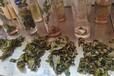 廣西奶茶茶葉批發-百色奶茶原料供應商-貴港港式錫蘭紅茶