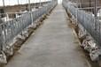 羊奶粉工廠招商-羊奶粉代加工-羊奶粉貼牌生產