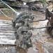 發往韓國的英德石假山石直徑1到2米的英德石批發