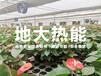 地熱農業種植-溫室大棚農業地熱開發-恒溫安全節能-地大熱能