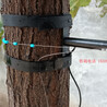 SDS-2树木生长变化传感器
