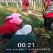 雙鴨山市超怎么種草莓苗